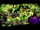 Vdeo: CHUDO - &quot;TOMATE G&quot;  (INSTRUMENTAL DE DAZ DILLINGER)