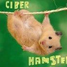 Ciber hamster
